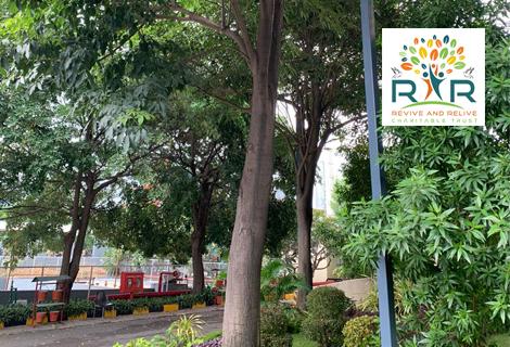 4 Spathodea TREEs Transplantation from Gachibowli, Hyderabad - RAR Charitable Trust