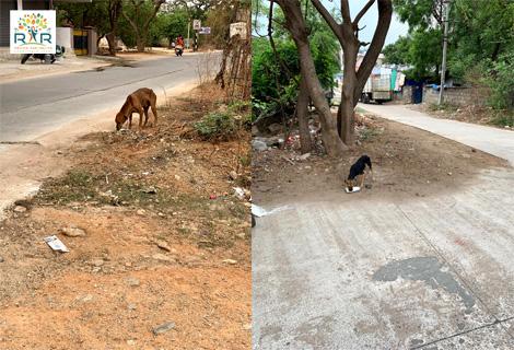 Feeding Stray and Abandoned Dogs - RAR Charitable Trust