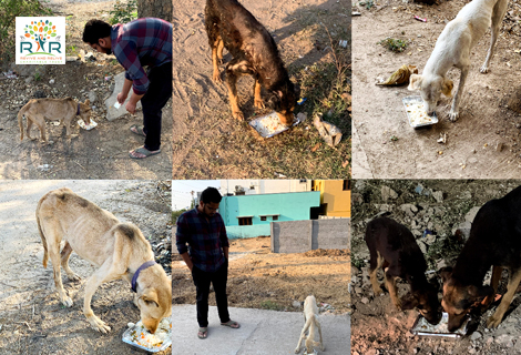 Feeding Stray and Abandoned Dogs - RAR Charitable Trust