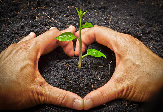 Tree Plantation & Maintenance